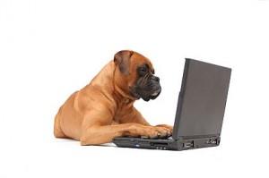 dog_computer_e5nr
